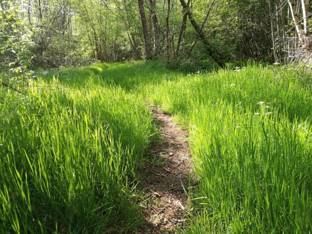 Chemin Le Bois Des Boeufs