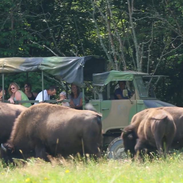 Parc à bisons en Creuse