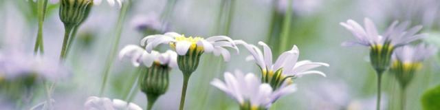 Jardin en Creuse