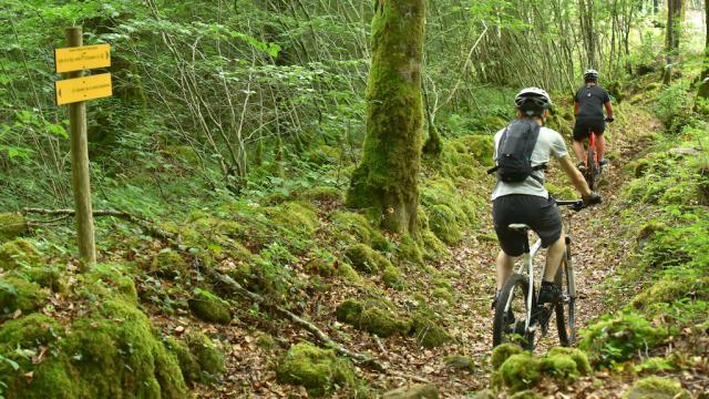 Forêt d'Épagne - Creuse Sud Ouest