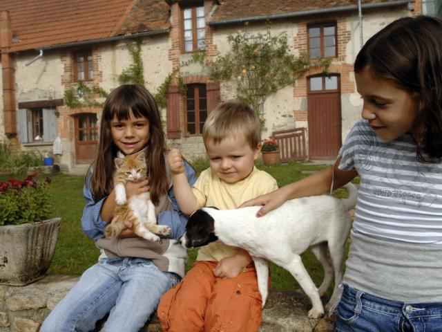 Calins avec le chaton et le chiens.