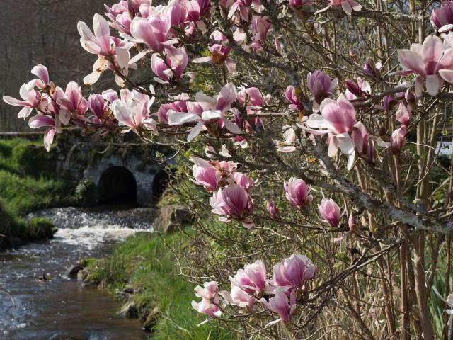 Fleur de Printemps - La Creuse