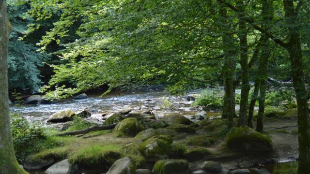 Rivière en Creuse