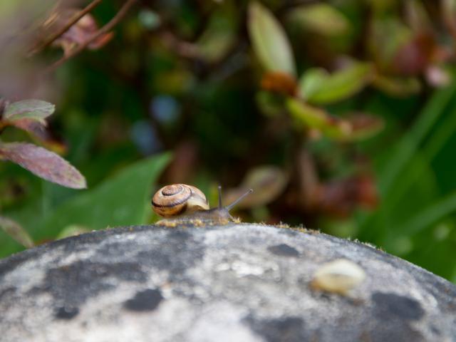 Escargot en Creuse
